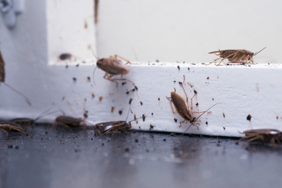 Everything you Need to Know About the Winter Pest Infestation!